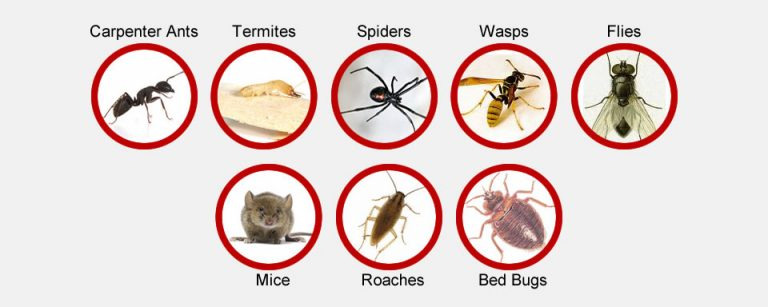 Pest Control Services in Negombo